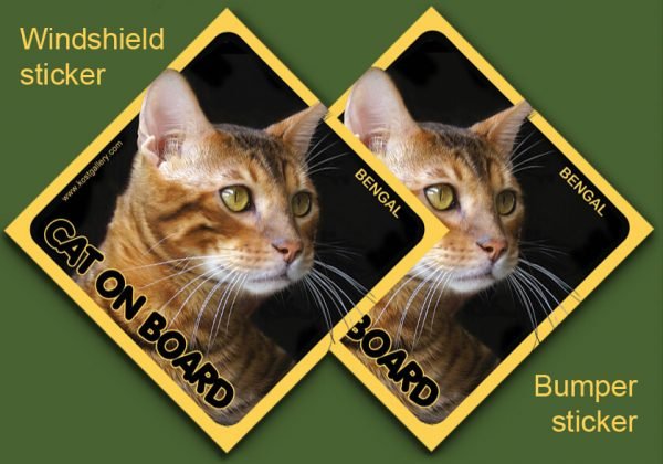 BENGAL CAT 01 - Nalepka 11,5x11,5cm