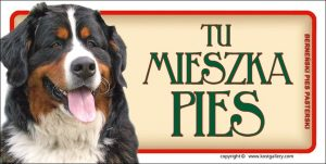 BERNESE MOUNTAIN DOG 01 - Tabliczka 18,5x9,5cm