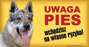 CZECHOSLOVAKIAN WOLFDOG 01 - Tabliczka 28x15cm