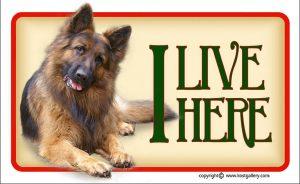 GERMAN SHEPHERD DOG LONG-HAIRED 01 - Tabliczka 18x11cm