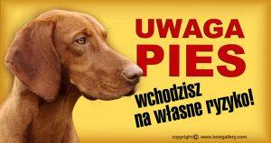 HUNGARIAN SHORT_HARED POINTING DOG 01 - Tabliczka 28x15cm