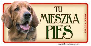 POLISH HUNTING DOG 01 - Tabliczka 18,5x9,5cm