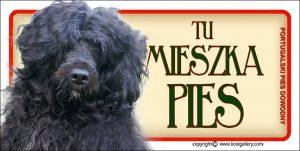 PORTUGUESE WATER DOG 01 - Tabliczka 18,5x9,5cm