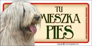 SOUTH RUSSIAN SHEPHERD DOG 01 - Tabliczka 18,5x9,5cm