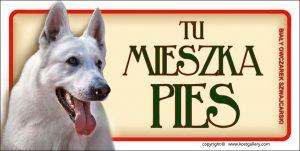 WHITE SWISS SHEPHERD DOG 01 - Tabliczka 18,5x9,5cm