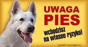 WHITE SWISS SHEPHERD DOG 01 - Tabliczka 28x15cm