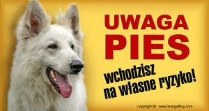 WHITE SWISS SHEPHERD DOG 03 - Tabliczka 28x15cm