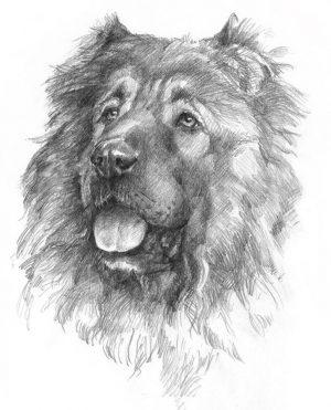 CAUCASIAN SHEPHERD DOG 01 - Rysunek