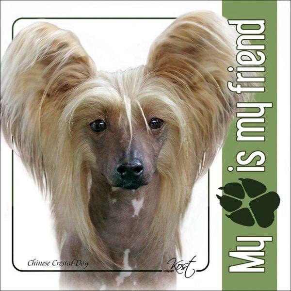 CHINESE CRESTED DOG 01 - Nalepka 14x14cm