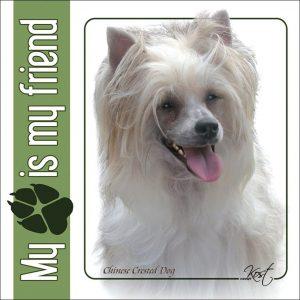 CHINESE CRESTED DOG 02 - Nalepka 14x14cm