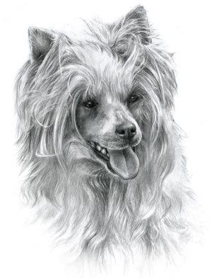 CHINESE CRESTED DOG 02 - Rysunek