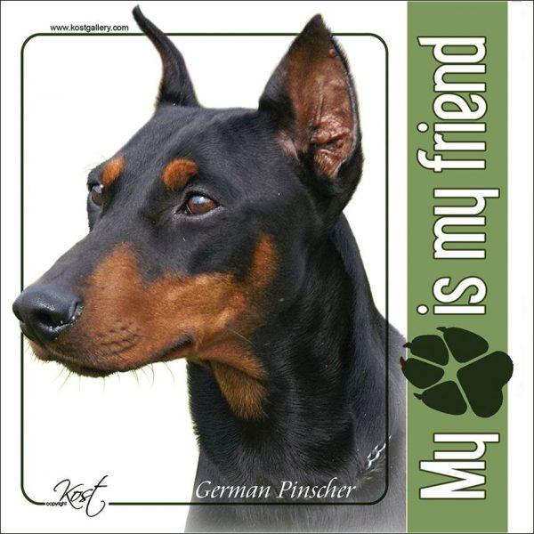 GERMAN PINSCHER 01 - Nalepka 14x14cm