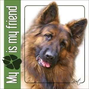 GERMAN SHEPHERD DOG 04 - Nalepka 14x14cm