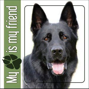 GERMAN SHEPHERD DOG 08 - Nalepka 14x14cm