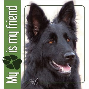 GERMAN SHEPHERD DOG 09 - Nalepka 14x14cm