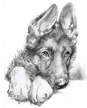 GERMAN SHEPHERD PUPPY 03 - Rysunek