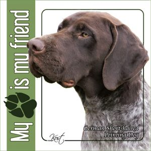 GERMAN SHORT HAIRED POINTING DOG 01 - Nalepka 14x14cm