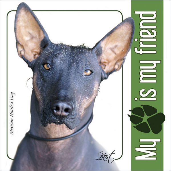 MEXICAN HAIRLESS DOG 01 - Nalepka 14x14cm