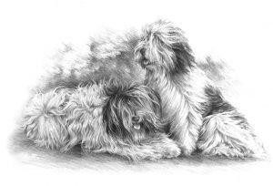 POLISH LOWLAND SHEEPDOG 02 - Rysunek