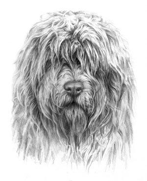 SOUTH RUSSIAN SHEPHERD DOG 01 - Rysunek
