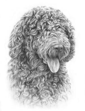 SPANISH WATER DOG 01 - Rysunek