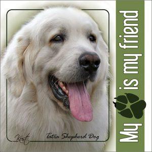 TATRA SHEPHERD DOG 02 - Nalepka 14x14cm