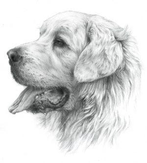 TATRA SHEPHERD DOG 02 - Rysunek
