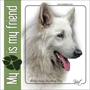 WHITE SWISS SHEPHERD DOG 02 - Nalepka 14x14cm