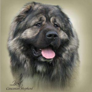 CAUCASIAN SHEPHERD DOG 01 - Zdjęcie