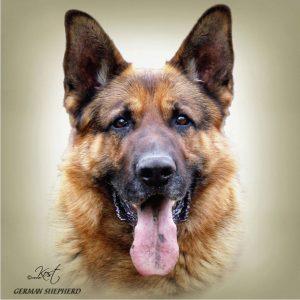 GERMAN SHEPHERD DOG 02 - Zdjęcie