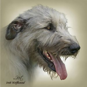 IRISH WOLFHOUND 02 - Zdjęcie