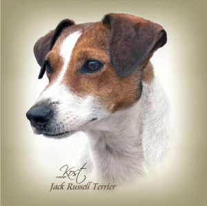 JACK RUSSELL TERRIER SHORT-HAIRED 01 - Zdjęcie