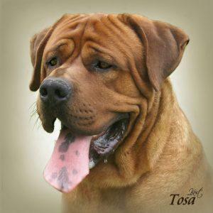 TOSA 02 - Zdjęcie