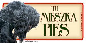BLACK TERRIER (Czarny Terrier) 01 - Tabliczka 18,5x9,5cm.jpg