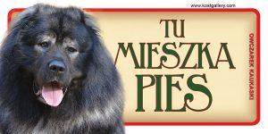 CAUCASIAN SHEPHERD DOG 04 - Tabliczka 18,5x9,5cm.jpg