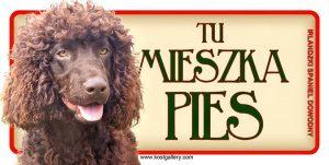 IRISH WATER DOG - Tabliczka 18,5x9,5cm.jpg