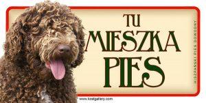 SPANISH WATER DOG - Tabliczka 18,5x9,5cm.jpg