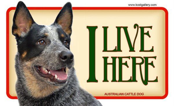 AUSTRALIAN CATTLE DOG – Tabliczka 18x11cm