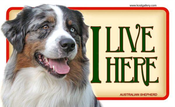 AUSTRALIAN SHEPHERD – Tabliczka 18x11cm