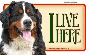 BERNESE MOUNTAIN DOG – Tabliczka 18x11cm