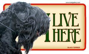 BLACK TERRIER – Tabliczka 18x11cm