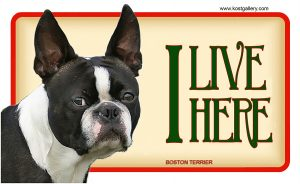 BOSTON TERRIER – Tabliczka 18x11cm