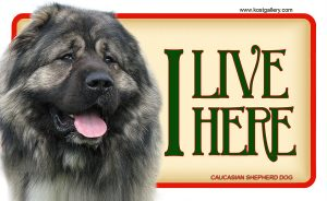 CAUCASIAN SHEPHERD DOG – Tabliczka 18x11cm