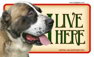 CENTRAL ASIA SHEPHERD DOG 01 – Tabliczka 18x11cm