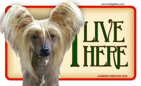 CHINESE CRESTED DOG – Tabliczka 18x11cm