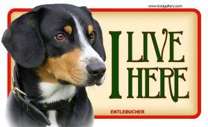 ENTLEBUCHER – Tabliczka 18x11cm