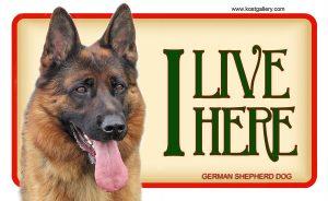 GERMAN SHEPHERD DOG 01 – Tabliczka 18x11cm