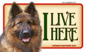 GERMAN SHEPHERD DOG LONG HAIRED – Tabliczka 18x11cm
