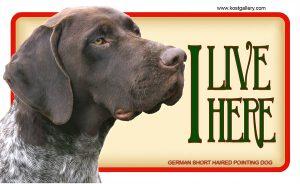 GERMAN SHORT HAIRED POINTING DOG 01 – Tabliczka 18x11cm