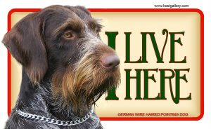 GERMAN WIRE HAIRED POINTING DOG – Tabliczka 18x11cm